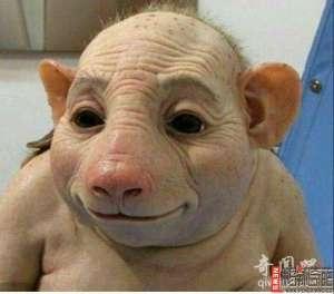 资讯生活【图】猪人是真的吗 广东母猪生下猪人图片